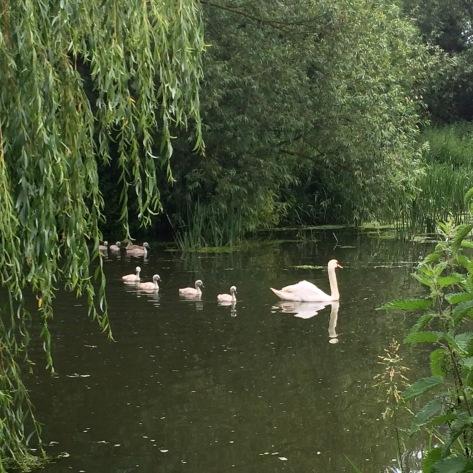 De paseo con la familia por Grantchester