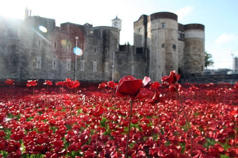 Instalación de Poppys en la Torre de Londres. Foto: Tower of London