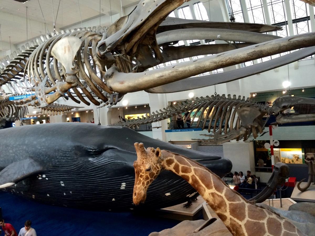 Cinco razones para visitar el Museo de Historia Natural de Londres