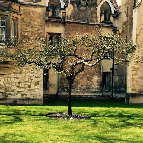 Descendiente del manzano de Isaac Newton.