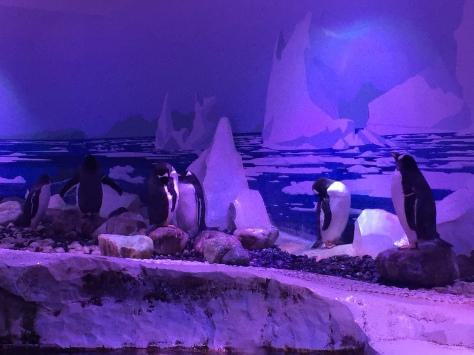 No termino de ver felices a los pingüinos :(