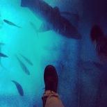 Caminando sobre tiburones
